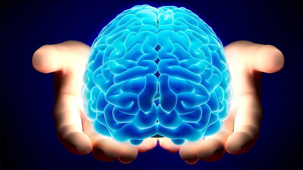human brain featured image